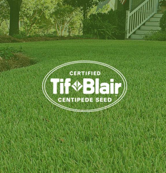 Tif Blair Centipede grass seed