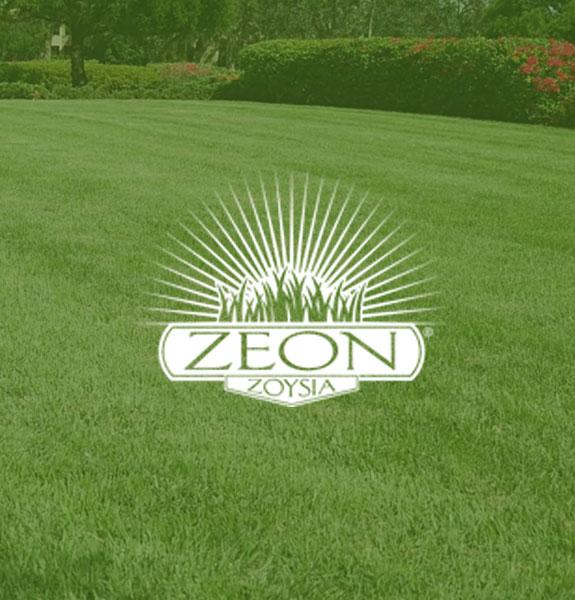 Zeon Zoysia grass
